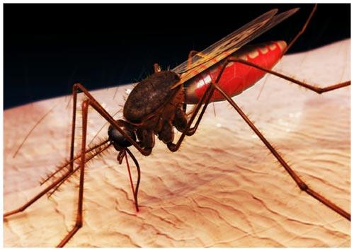 Ngiên cứu để làm cửa lưới chống muỗi giá rẻ.