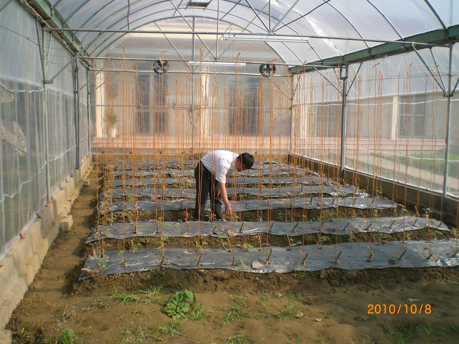 mô hình xây nhà lưới chống muỗi trồng rau